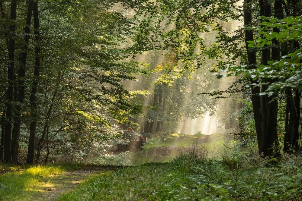Miten hyvä luontoyhteys avaa portit sisimpääsi?